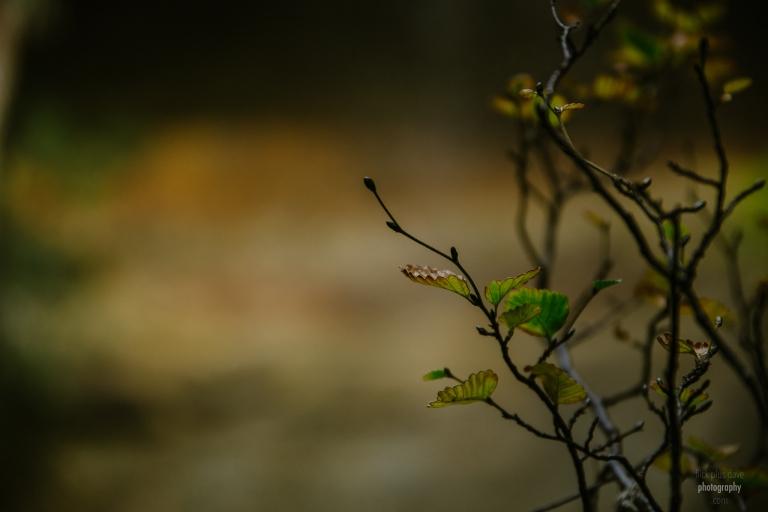 Autumn takes over the Fagus